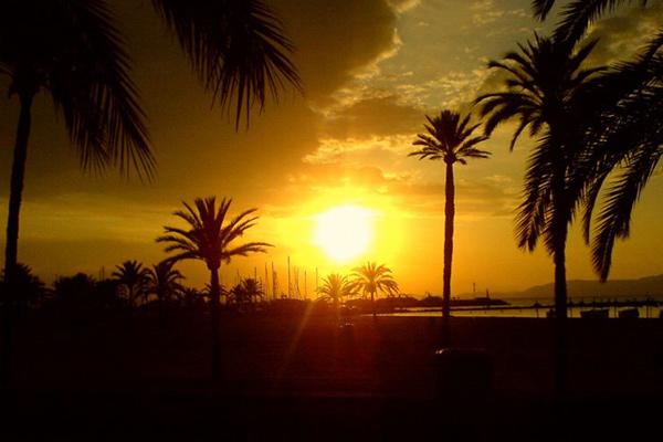 sonnenaufgang Palmenduft & Meeresbrise – Überwintern auf Mallorca