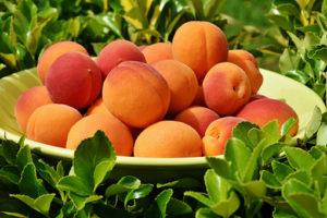 Aprikosen-300x200 Lebensmittel des Monats – Juni – die Aprikose