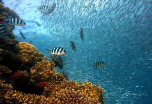 Fische_tauchgang_mallorca-300x205 Tauchen auf Mallorca - Auf ins kühle Abenteuer!