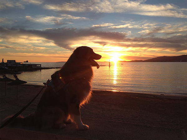 hund-auf-mallorca Mallorca mit Hund - Reisen auf vier Pfoten