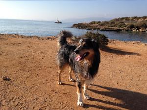 hundestrand-es-carnatge-300x225 Mallorca mit Hund - Reisen auf vier Pfoten